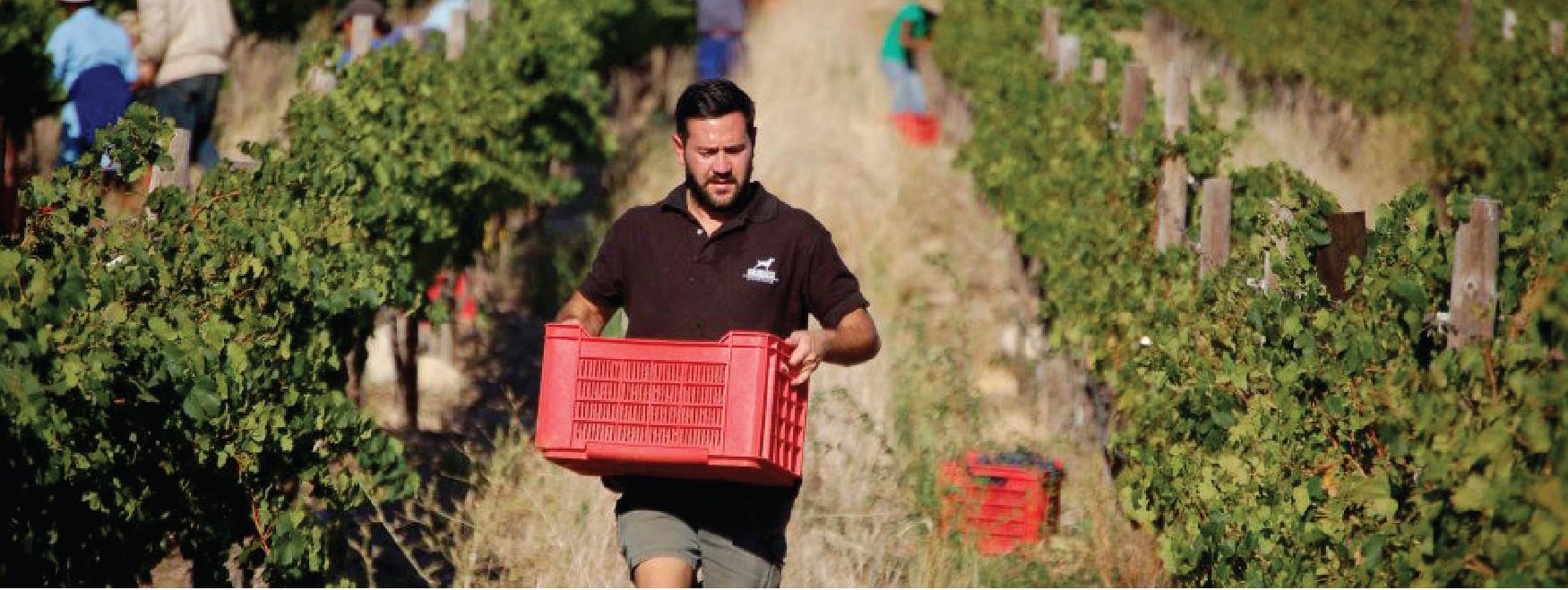 Neil Marias Dunstone winery
